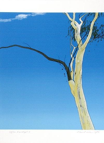 Eucalypt I , 1975