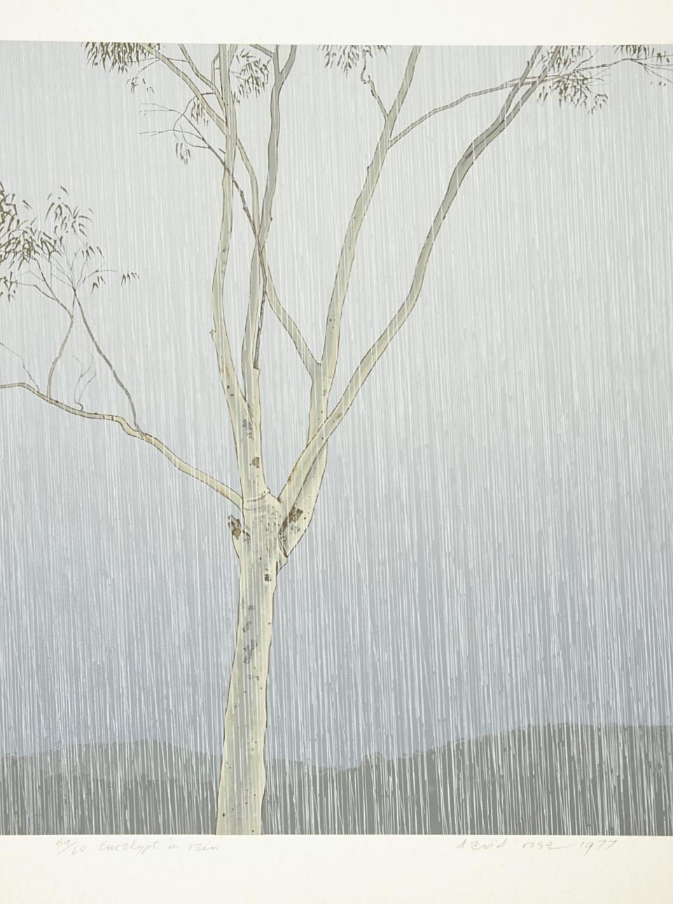 Eucalypt in Rain , 1977
