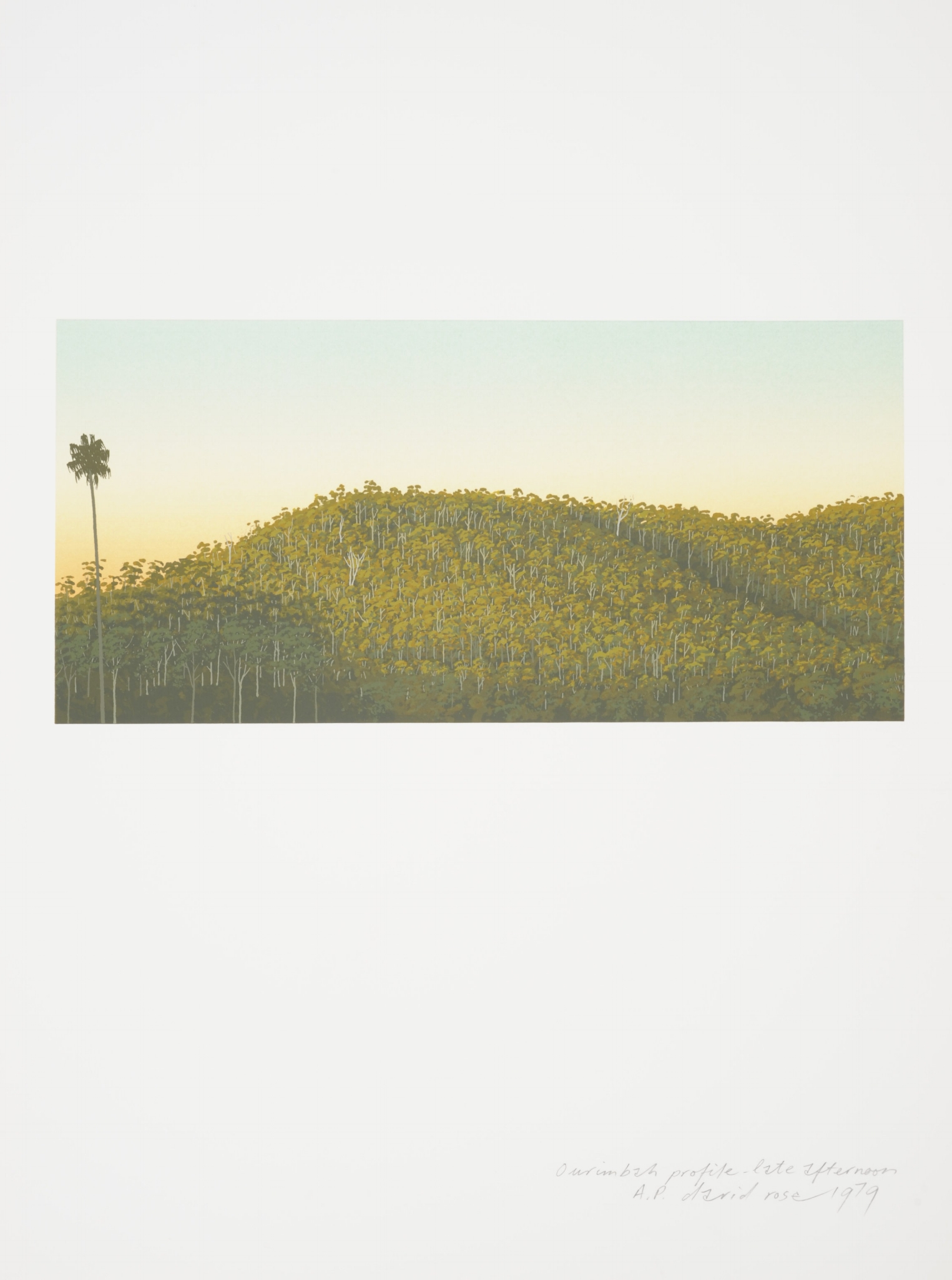 Ourimbah profile – late afternoon , 1979