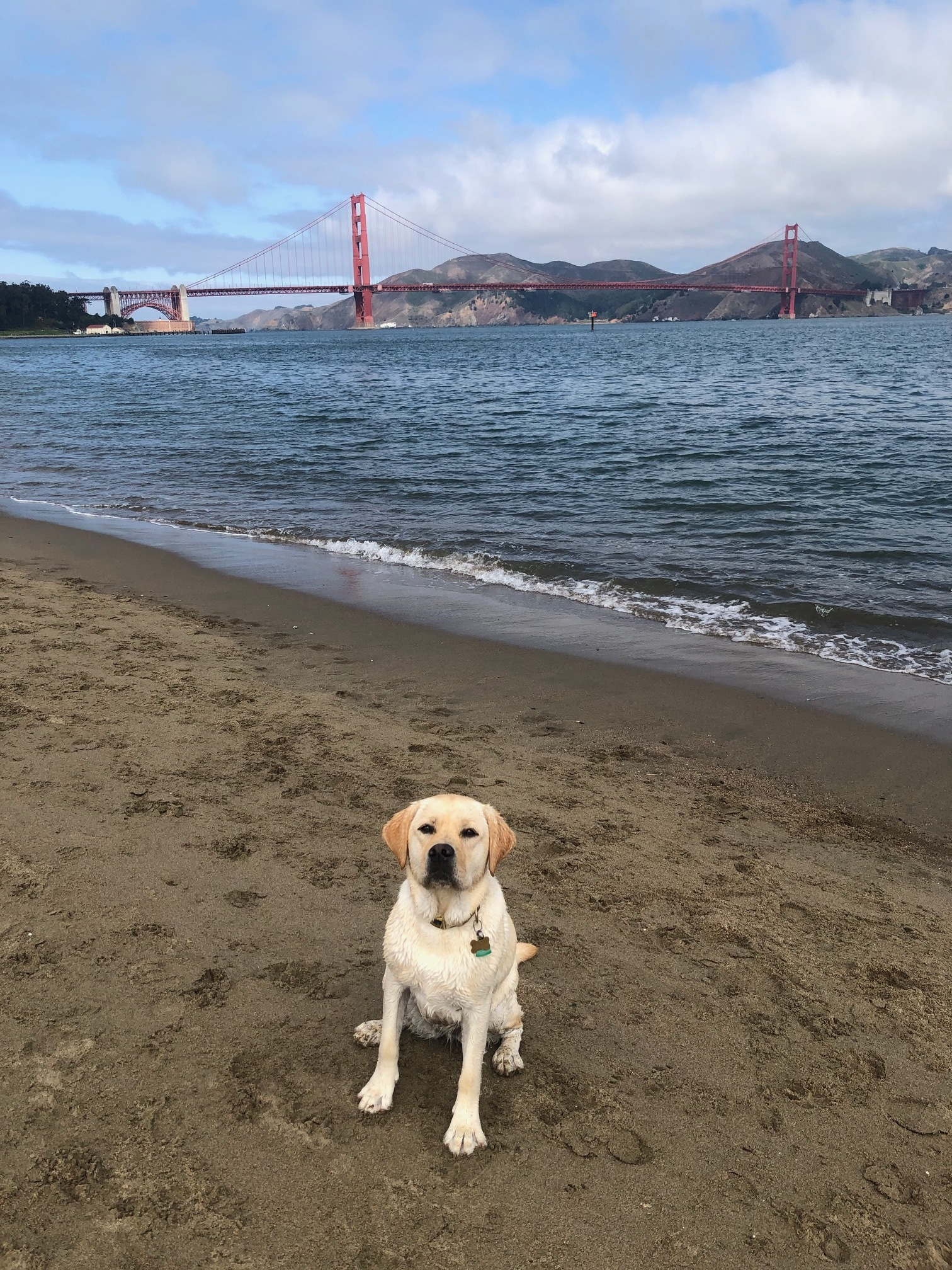 Zaby, at Crissy Field, in a rare, obedient moment.
