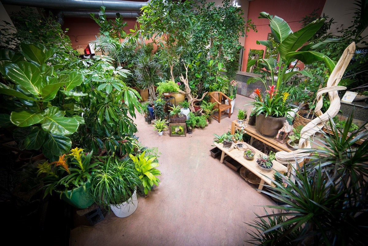 exotic plants store_smaller.jpg