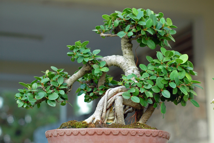 bonsai tree.jpg