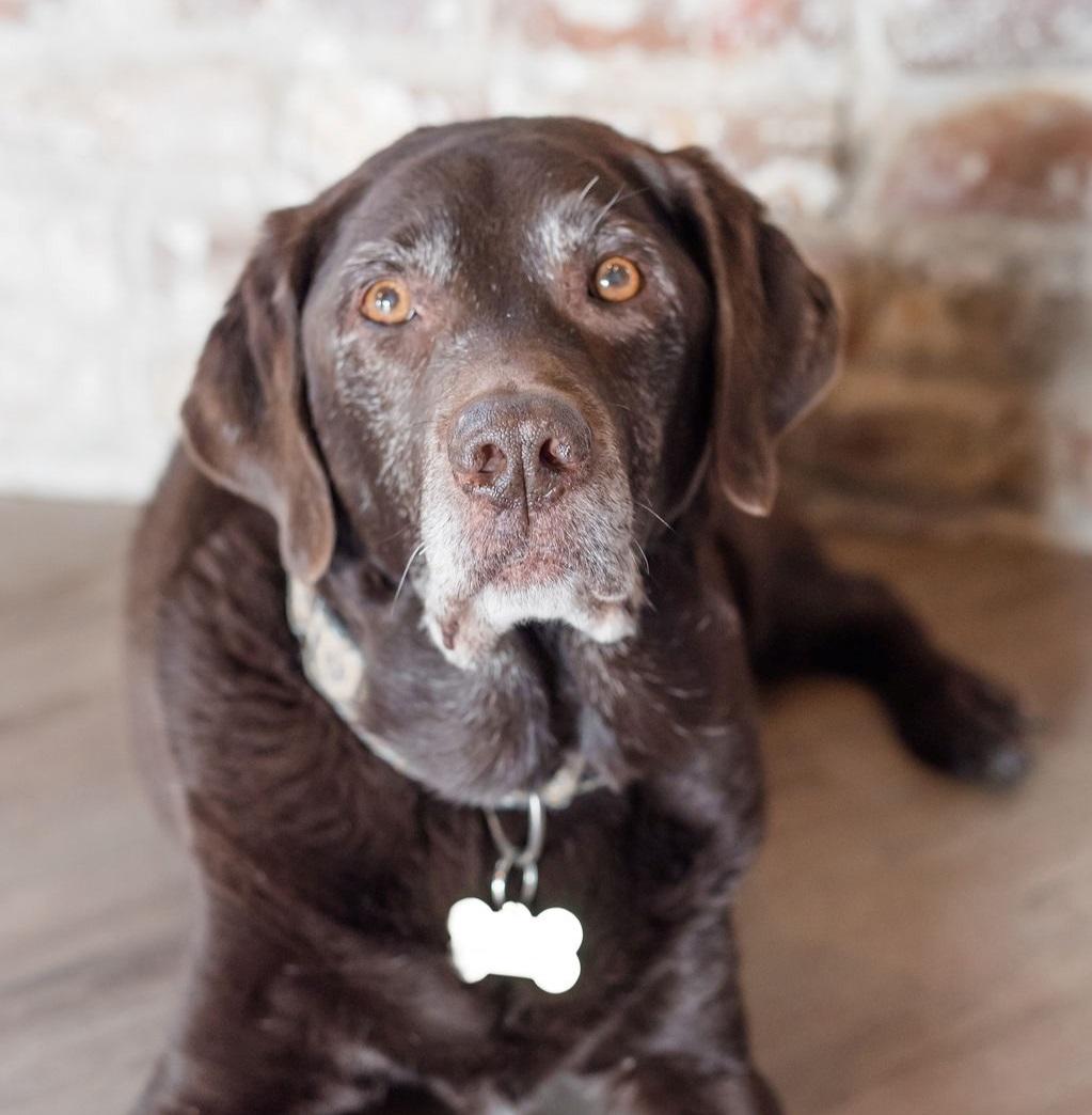 Baxter, beloved studio dog