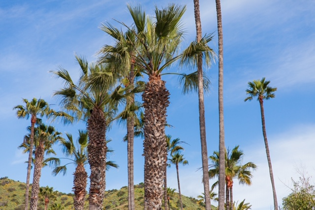 There are palm trees everywhere!