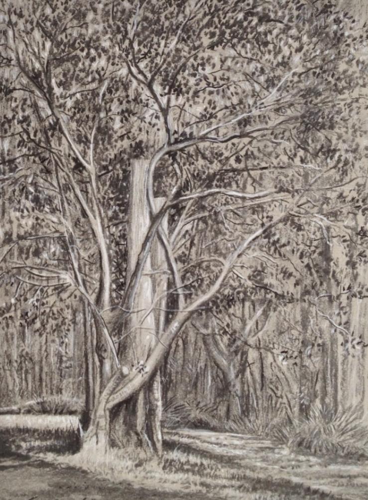 Rejuvenating tree
