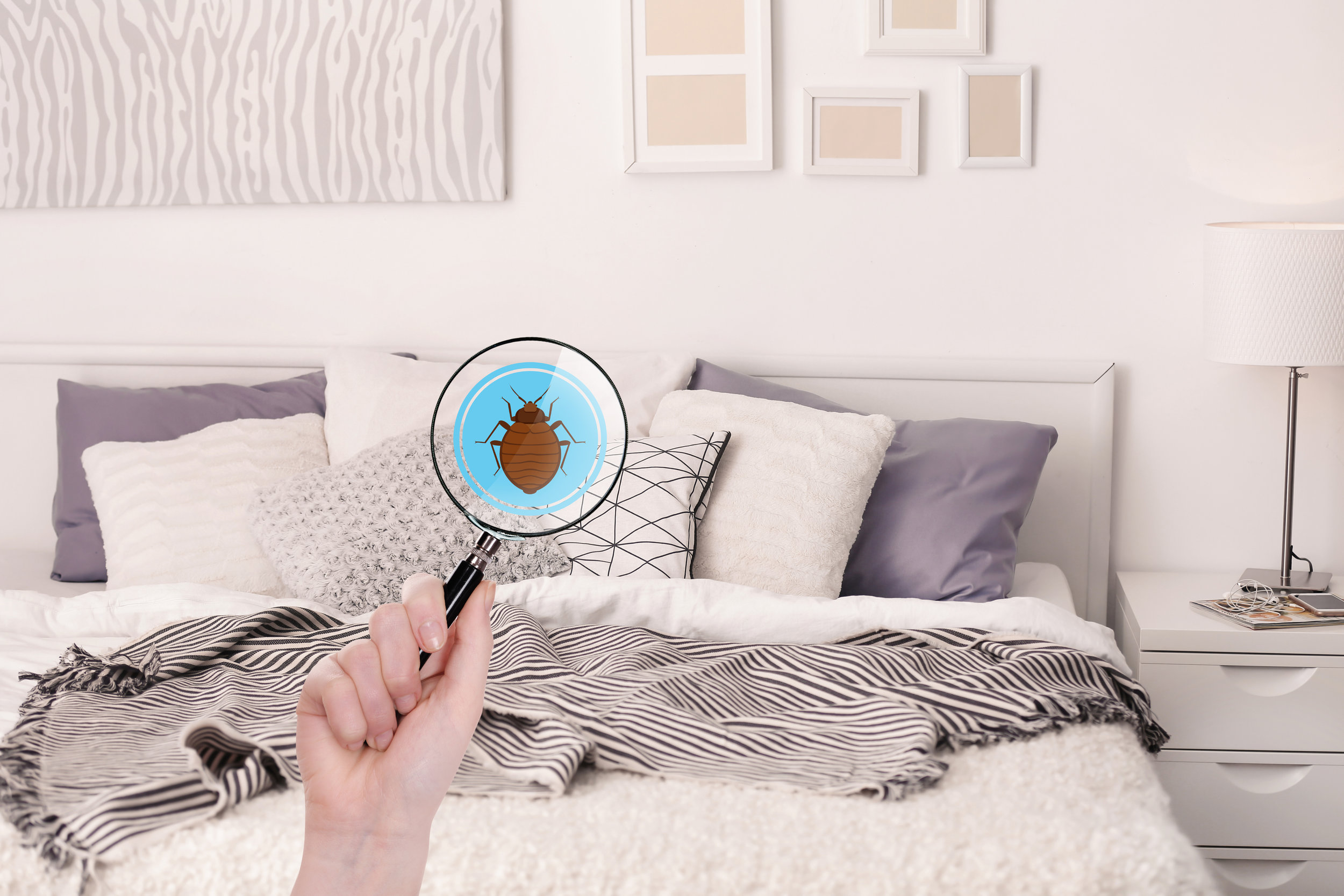 What to Do if Bed Bugs Enter Your Home in Queens, NY