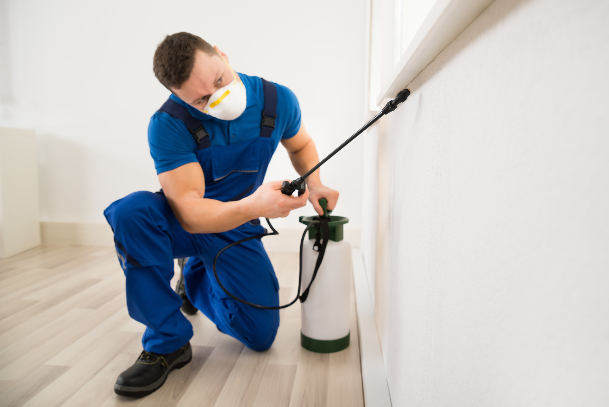 Why You Should Hire a Professional Bed Bug Exterminator instead of DIY in New Jersey