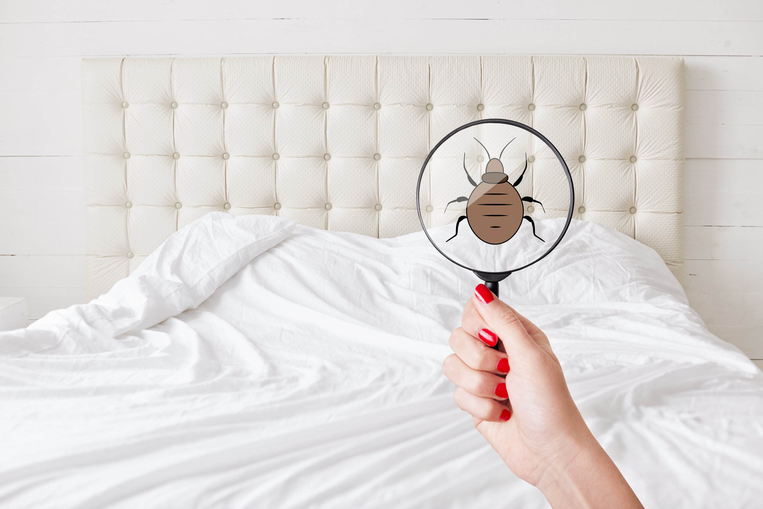 Bed Bug Exterminator Tips for Keeping the Infestation From Spreading In Your Manhattan, NY, Home