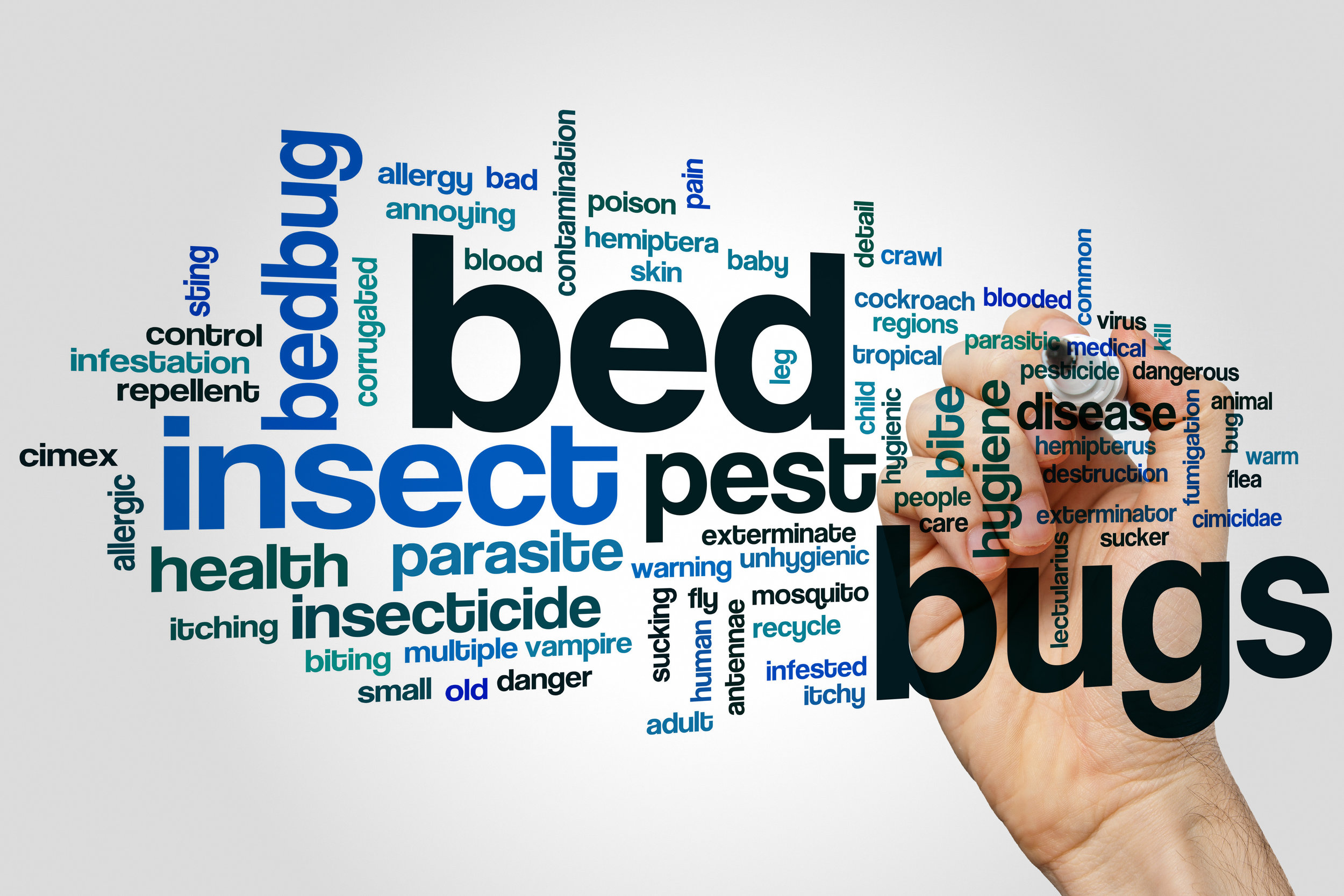 6 Common Myths about Bed Bug Service in Bronx, NY