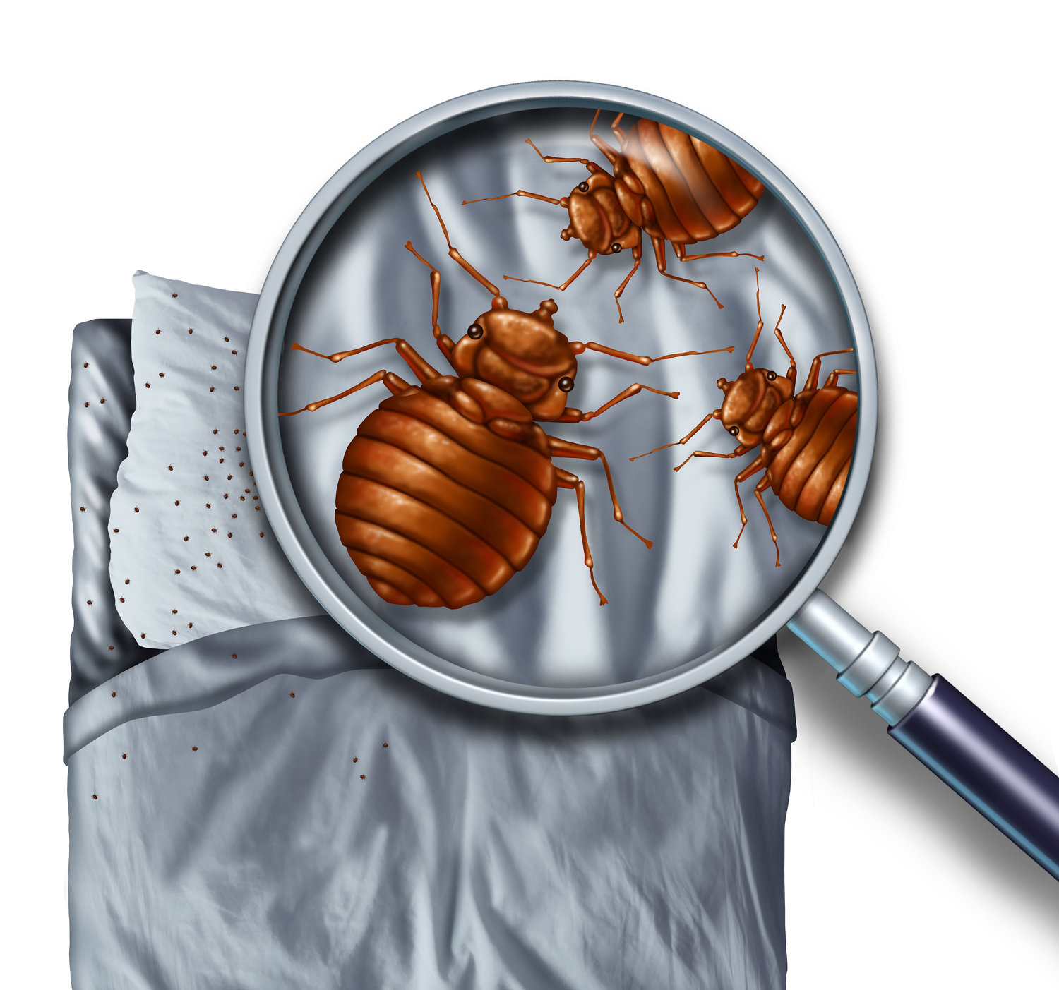 Brooklyn, NY, Bed Bug Exterminator Company Goes Green with Cryonite Freeze Action