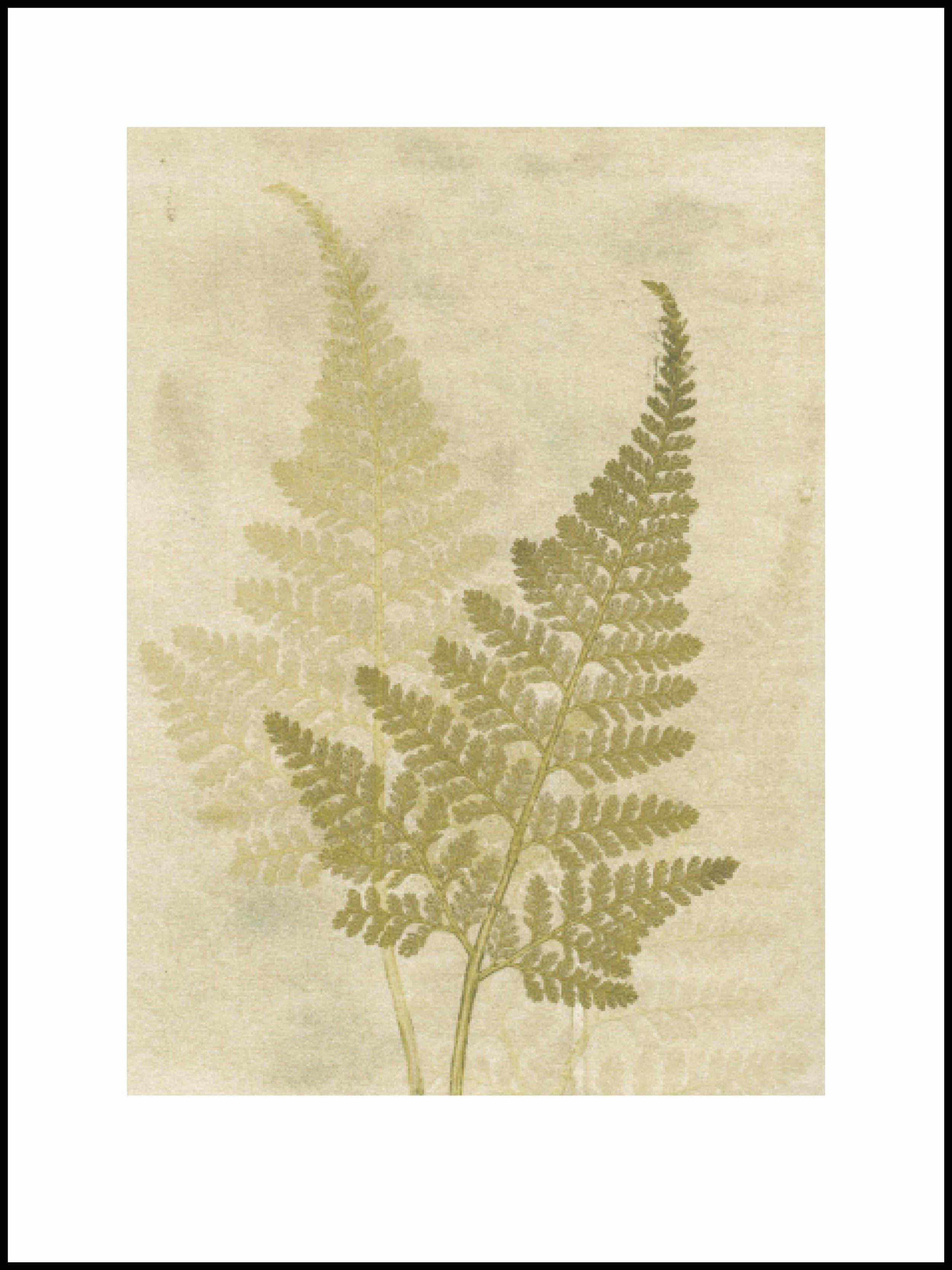 30x40.fern.olive:500kb.jpg