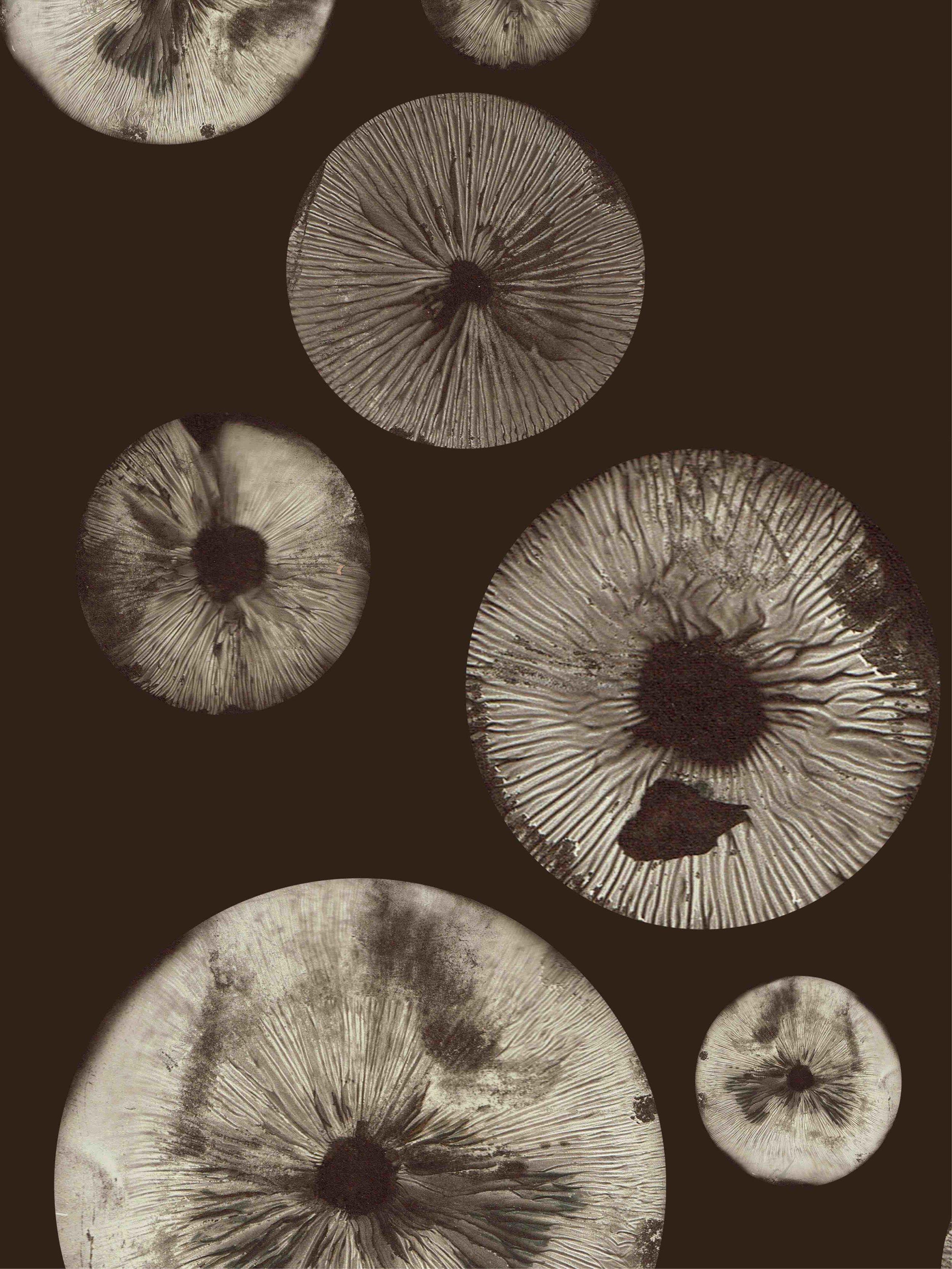 mushroom5 chocolate 500kb.jpg