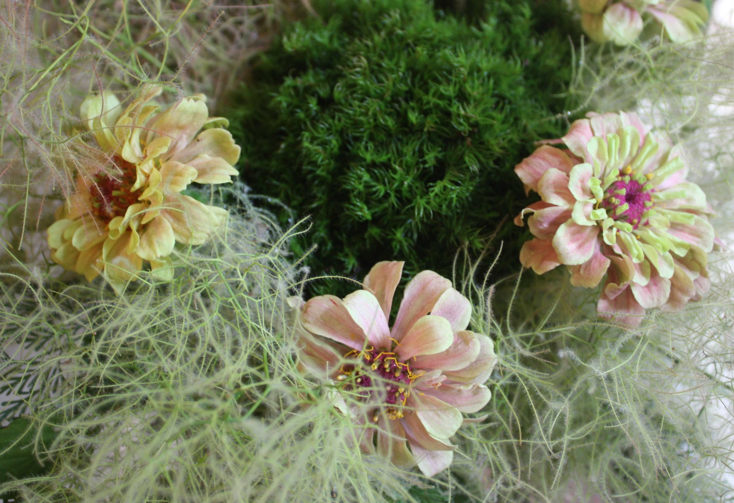 Zinnia, smoke tree and fresh moss. From one of my lessons.
