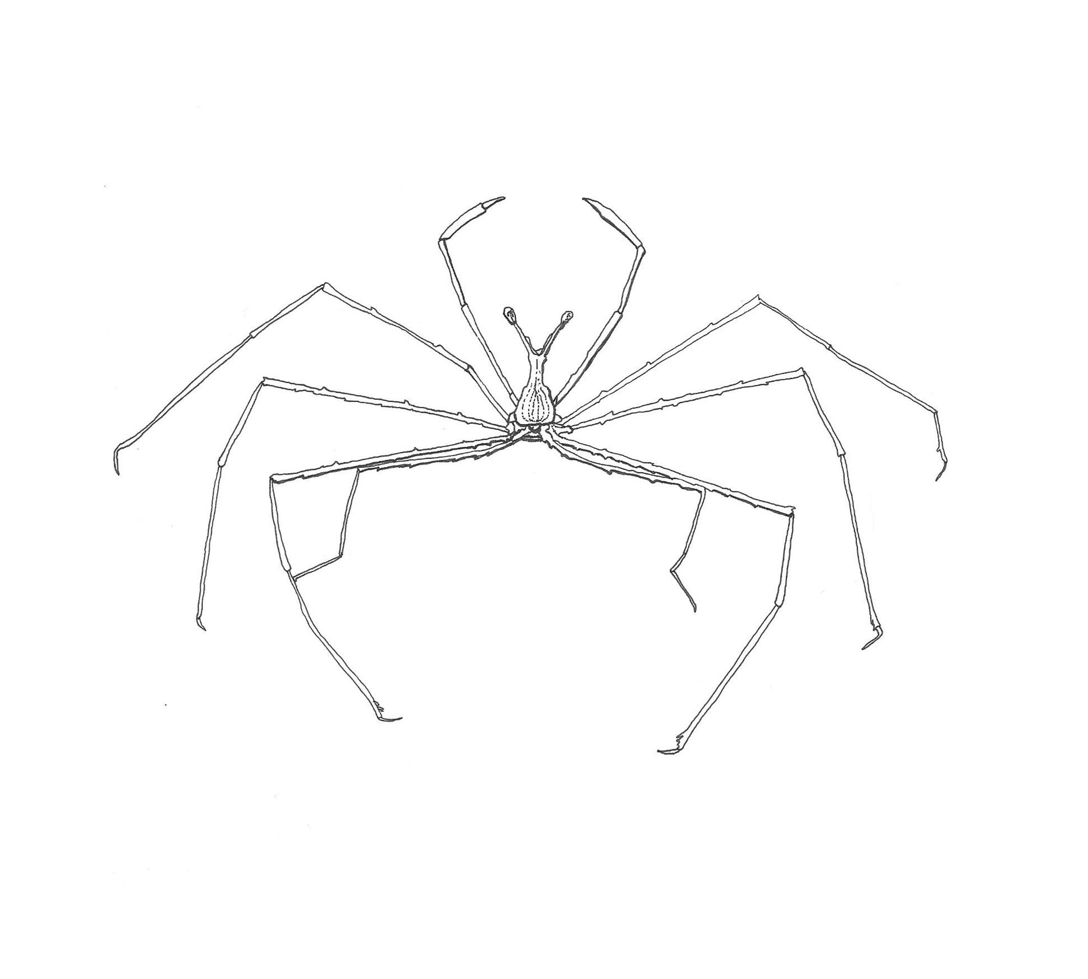 Whiten_crab_illustration_1whiteback.jpg