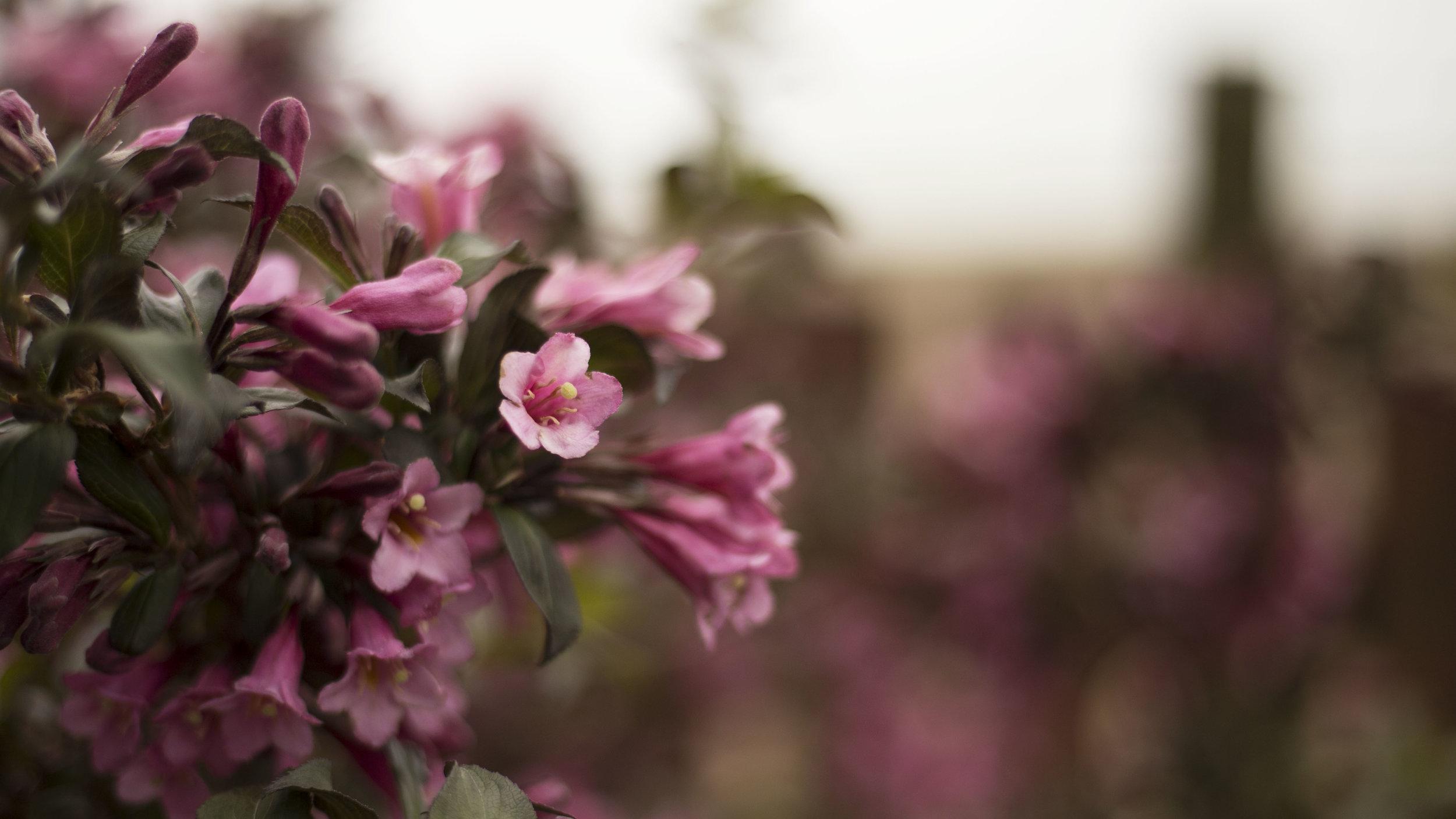 June garden flowers