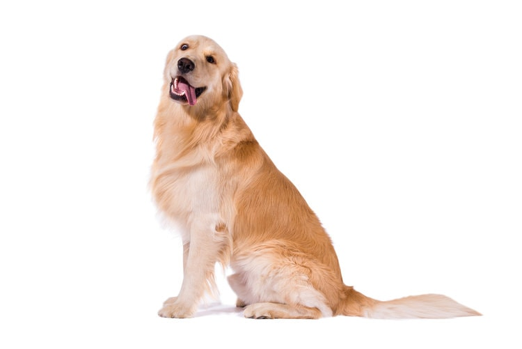 private dog training in Los Gatos, Campbell, Saratoga and Almaden, as well as group fitness classes in downtown San Jose