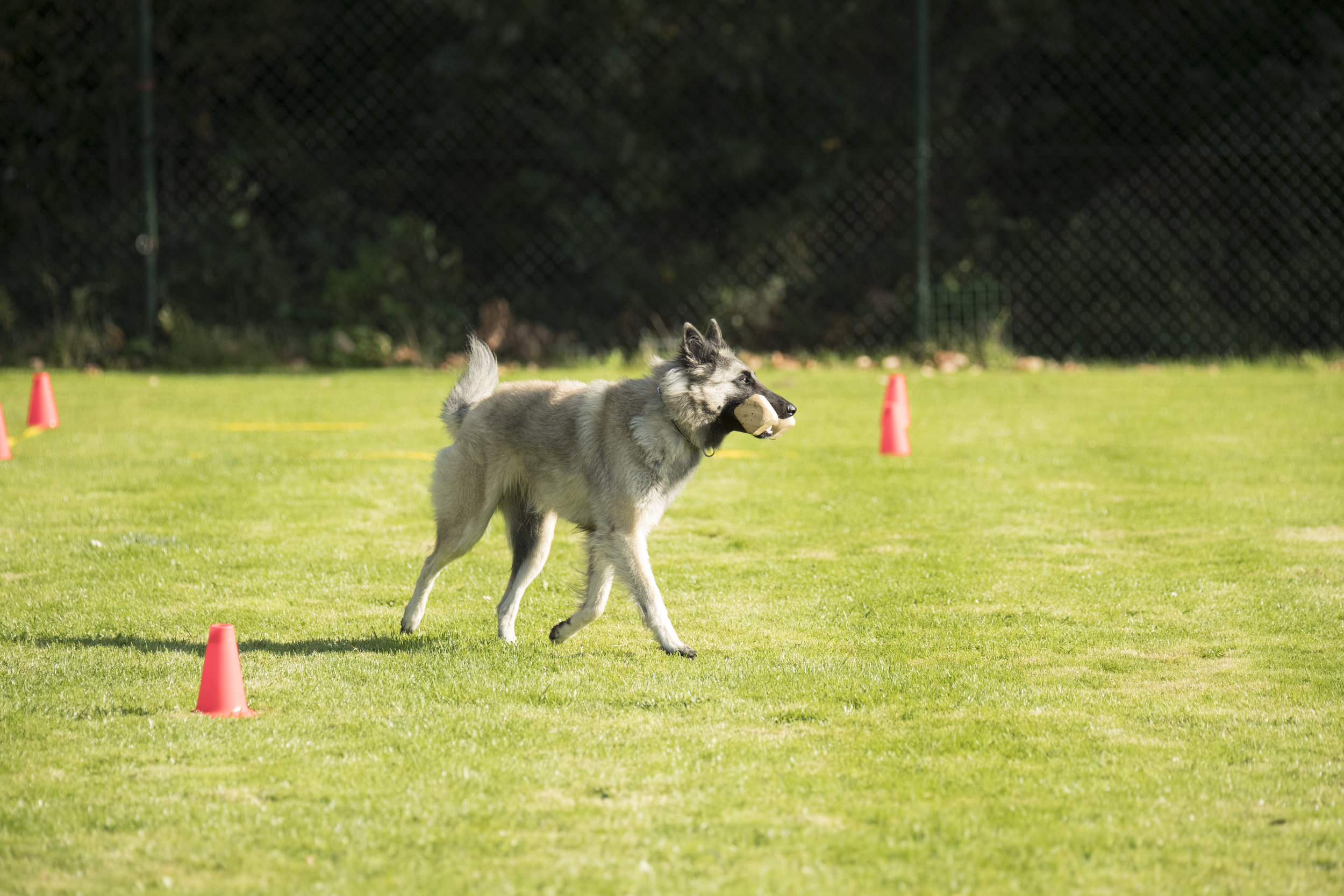 Private Training - Private, one-on-one fitness training with an expert instructor is a fun, efficient way to get your dog into peak condition at a time and place that's most convenient for you. Perfect for agility dogs, working dogs, family dogs and even puppies!