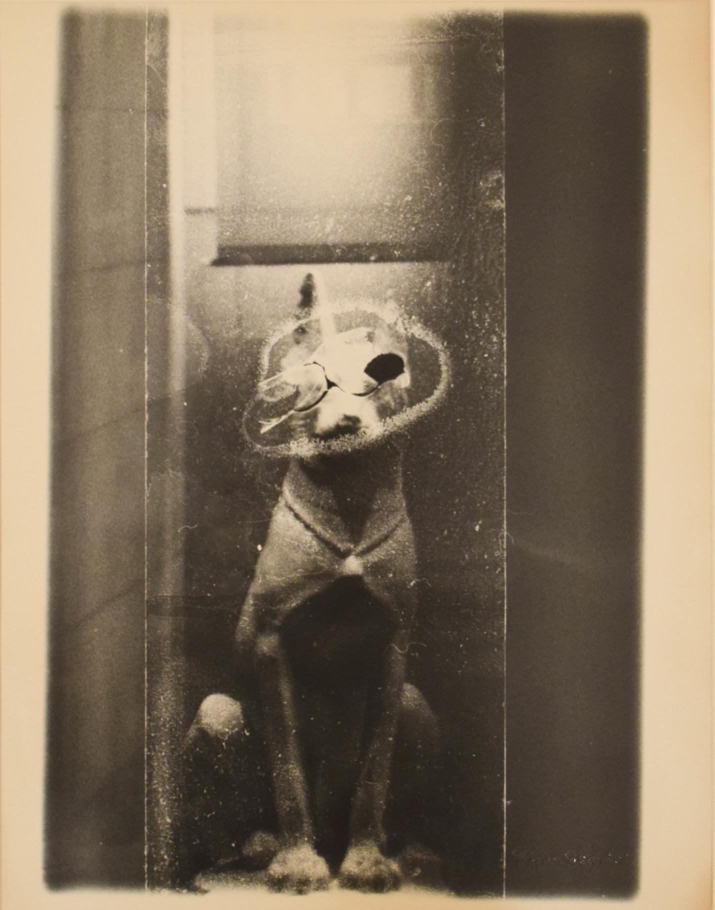 Vasco Ascolini,  Bestiario Fantastico - Grey Dreams , 2001, single photograph silver print, 35,5 x 27,7 cm, courtesy Galleria Weber & Weber
