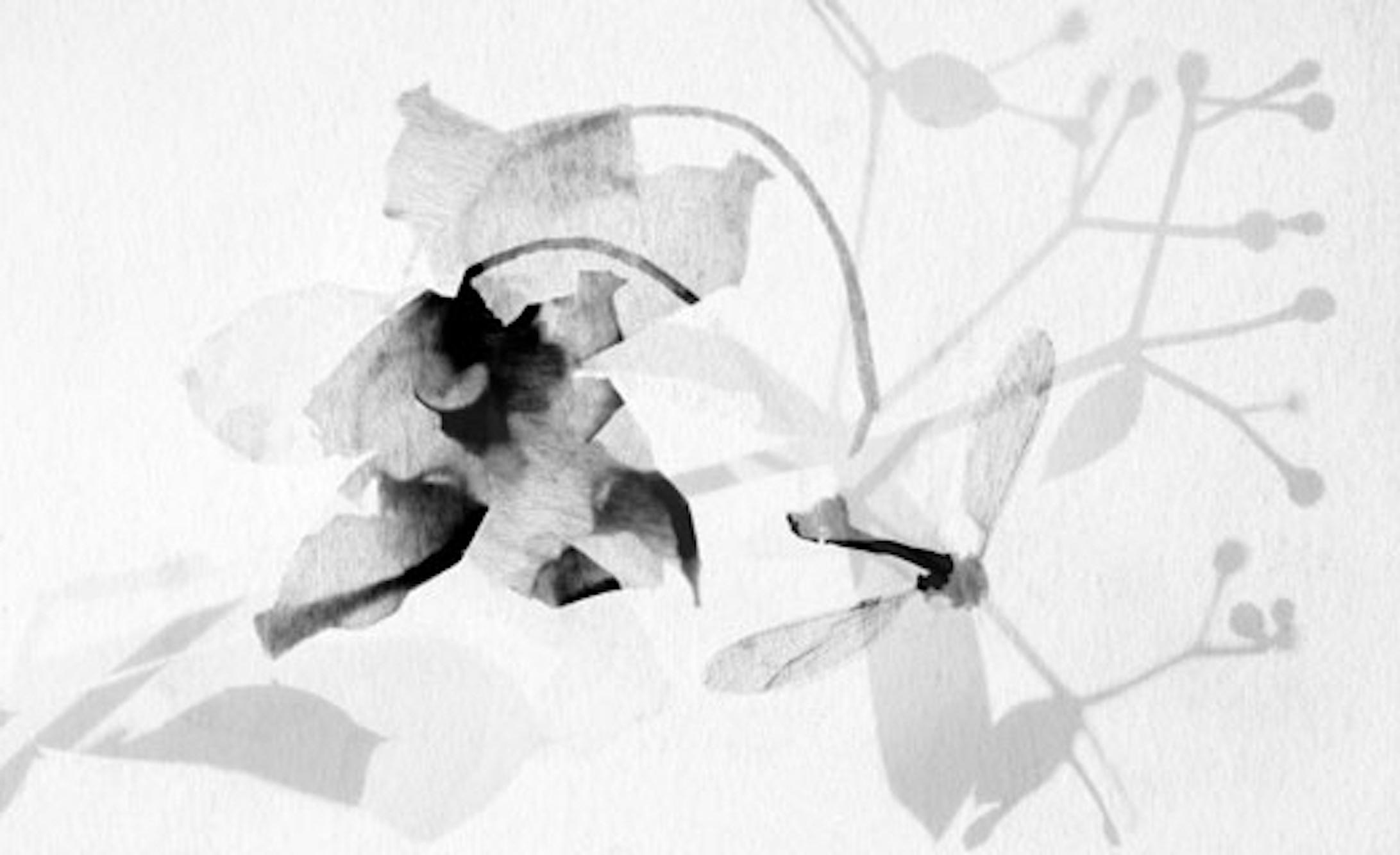 Stefania Ricci,  Insieme naturale 129 , 2006, rayogramma, stampato a pigmenti di carbone su carta cotone, 81 x 112 cm, courtesy Stefania Ricci
