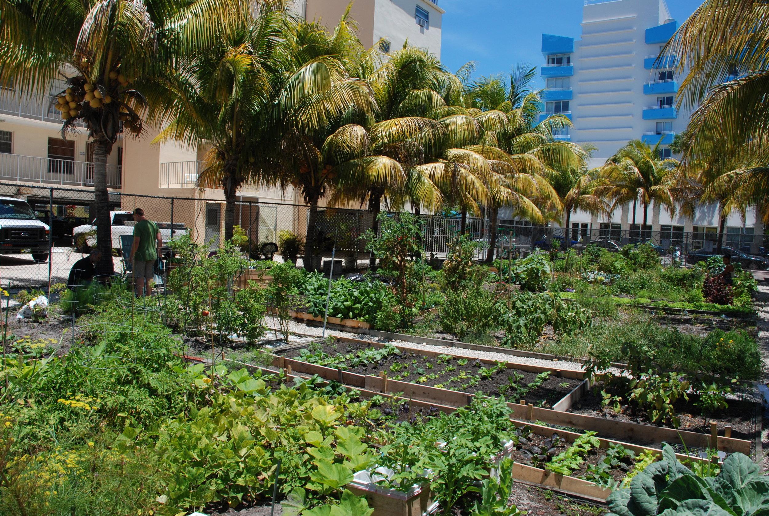 2009_SouthBeach_community_garden_Miami_3516803613.jpg