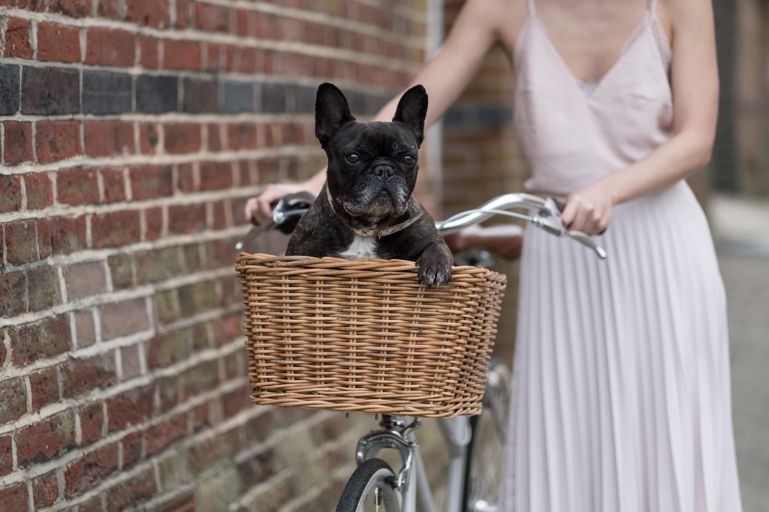 tokyobike-simple-minimal-norwich-fiona-burrage-photographer-dog-basket.jpg
