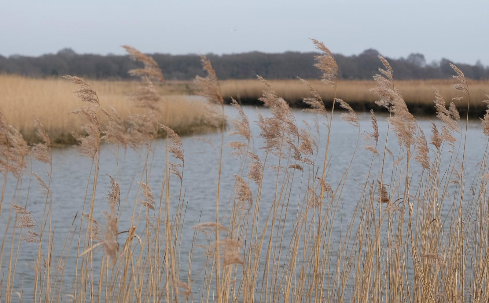 Snape-Suffolk-Fiona-Burrage.jpg