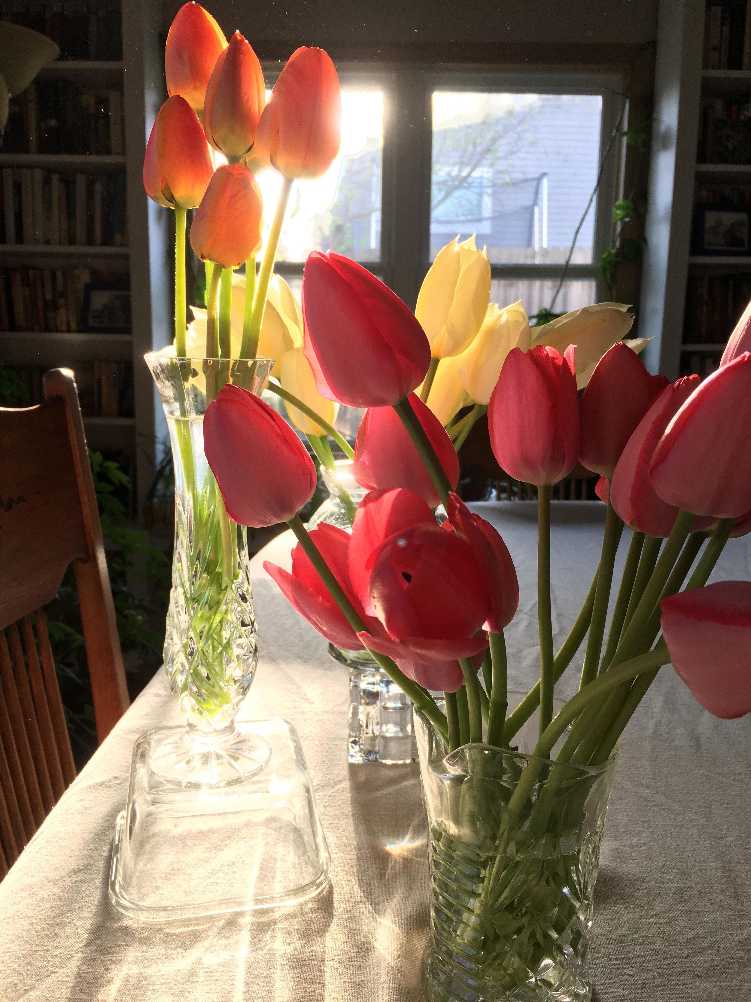 may 1 tulips.jpg
