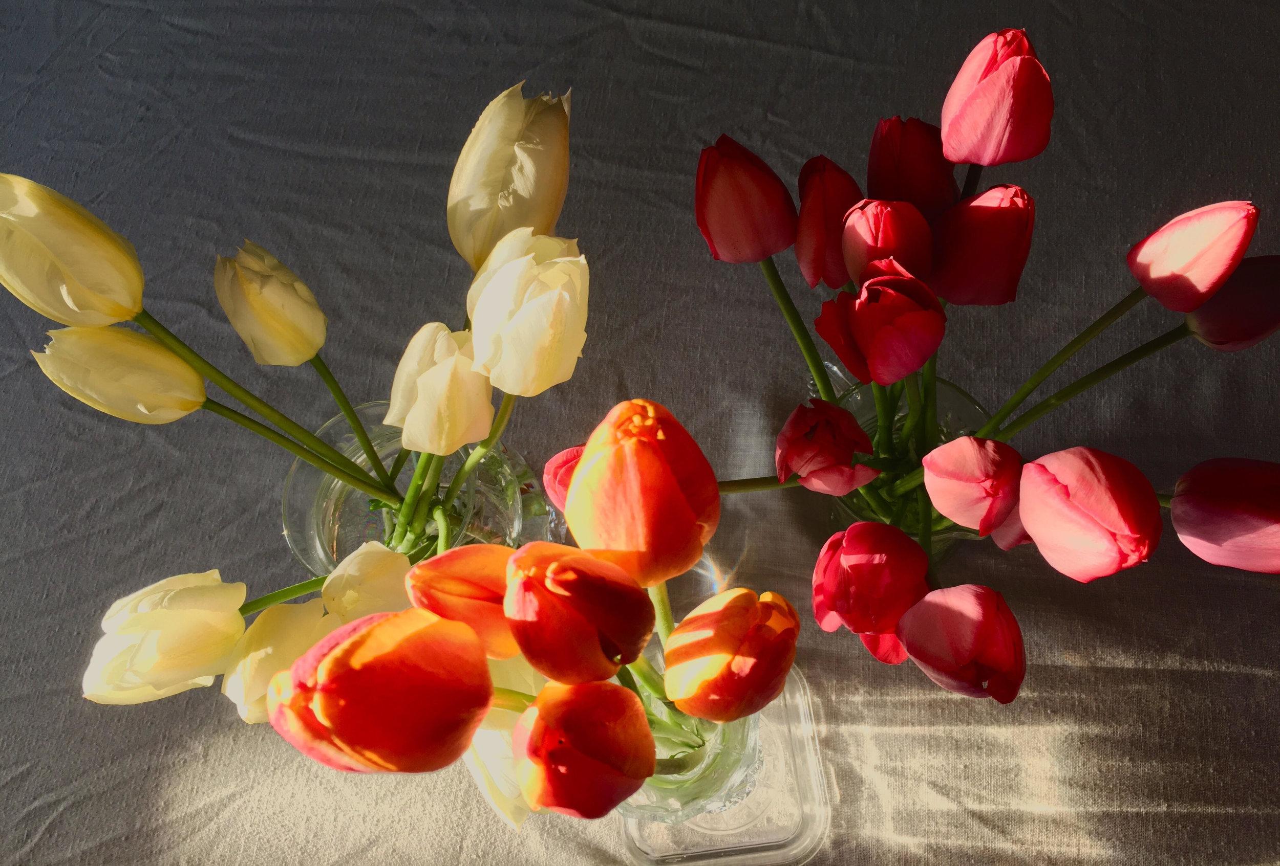 may 1 tulips 2.jpg