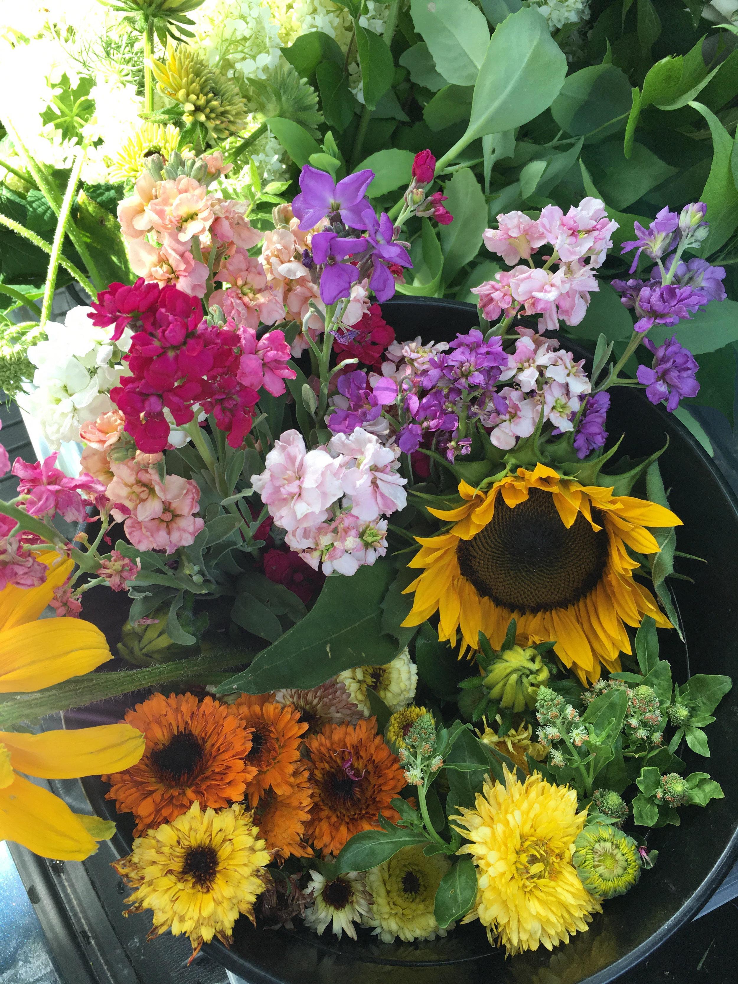 harvest buckets 6.29.19.jpg
