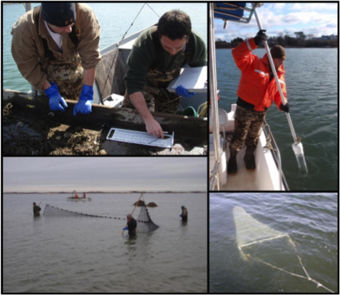 Ecosystem Analysis (clockwise from top left):  counting and measuring of wild winter flounder, core sampling, benthic trawl, beach seining.