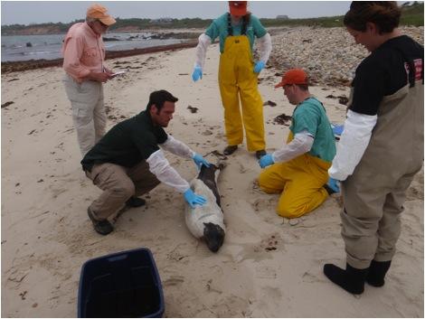 Environmental Technician, Andrew Jacobs, assists New England Aquarium staff