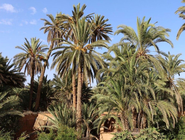 skoura-palmery.jpg