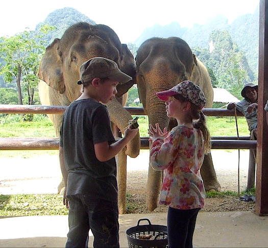 DECISION TIME: WHICH ELEPHANT GETS THE TAMARIND?