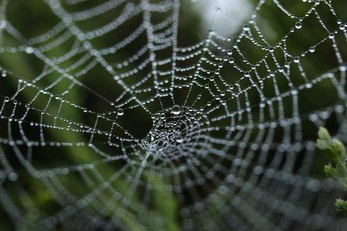 spiderimagee.jpg
