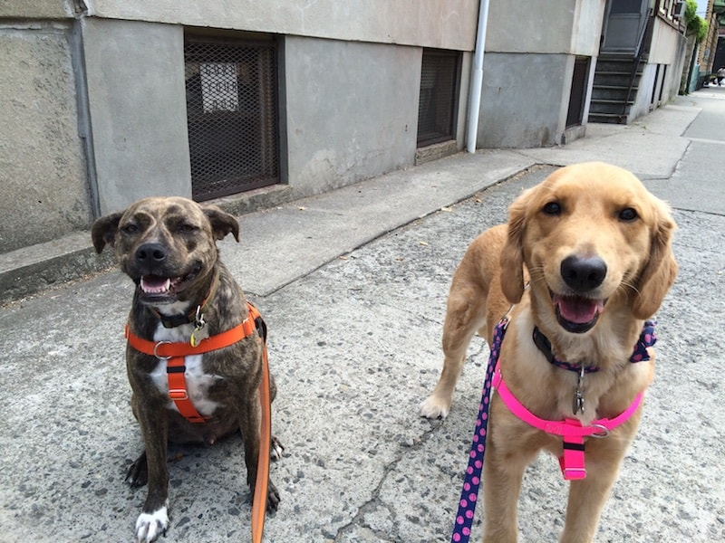 weehawken new jersey group dog hikes