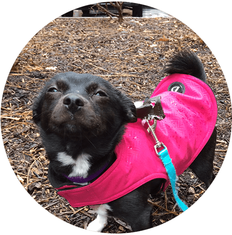 Dog walking and training in Weehawken, NJ
