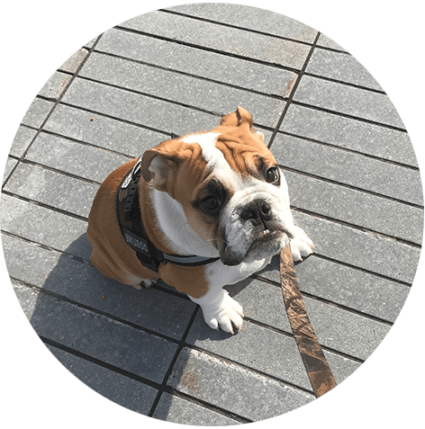 initial-consult-dog-sitting-dog-boarding-weehawken.png