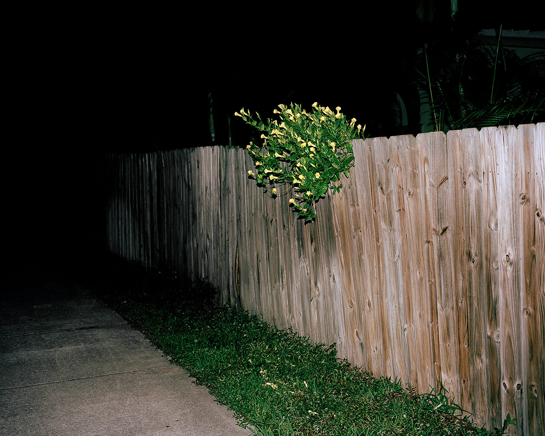 15_flowers on fence.jpg