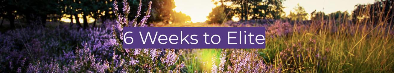 6 weeks to elite.png