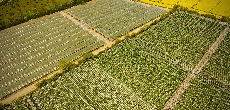 Berries Direct Farming: Hempnall - Spring Farm, Spring Lane, Hempnall, NR15 2NYOur largest site and also the location of our PackhouseSite Manager: Ilja PavlovPackhouse Manager: Kristina Nikolova