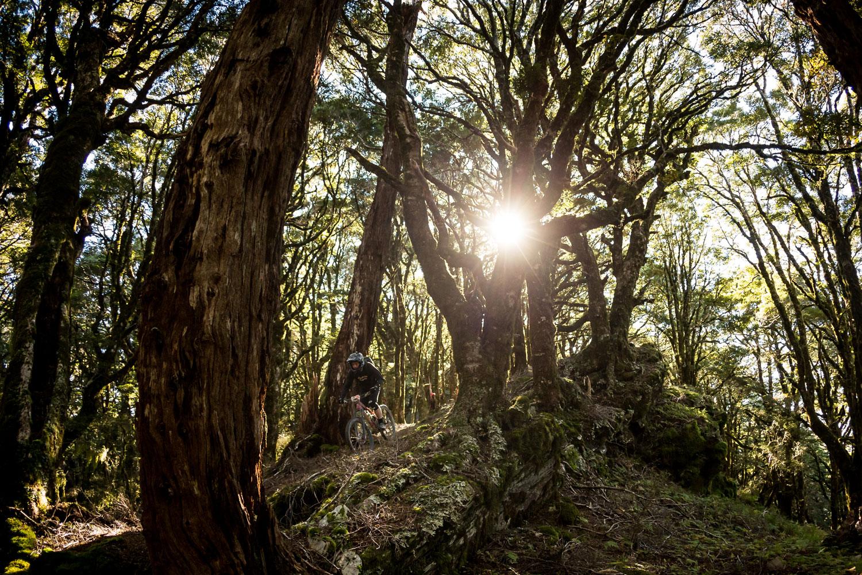 nzmtb_home_rotorua_enduro-in-trees.jpg