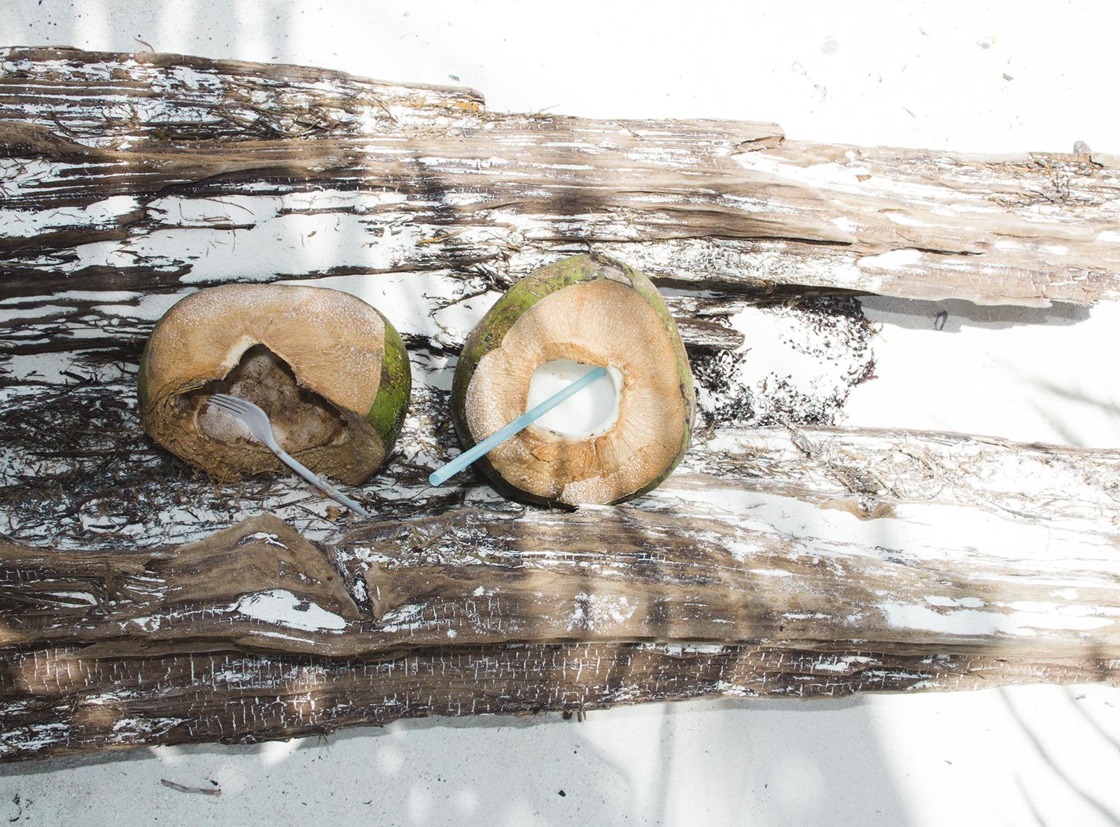 Coconuts - Mexico Tropical®.jpg