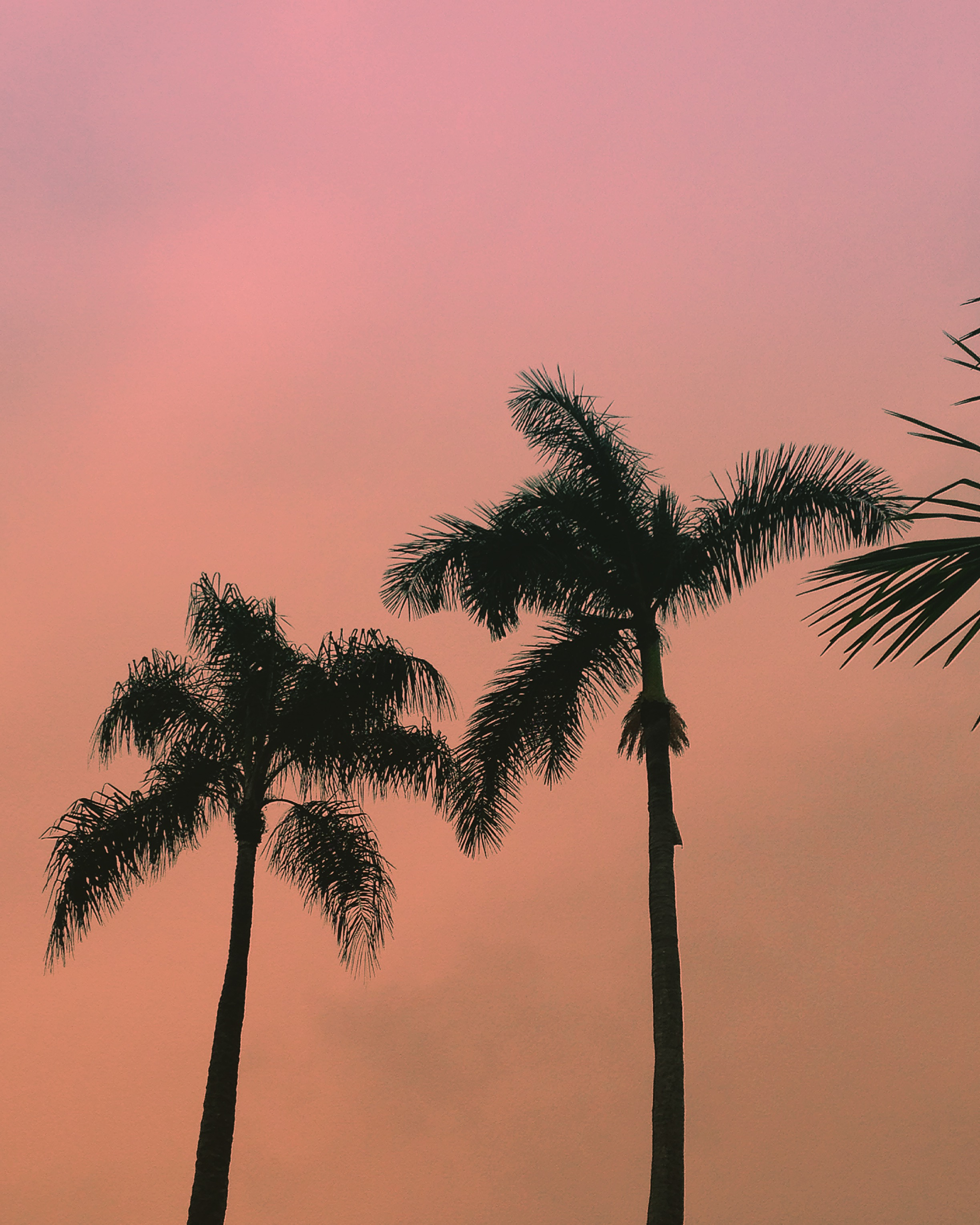 Beach palms at sunset - Mexico Tropical® travel agency.JPG