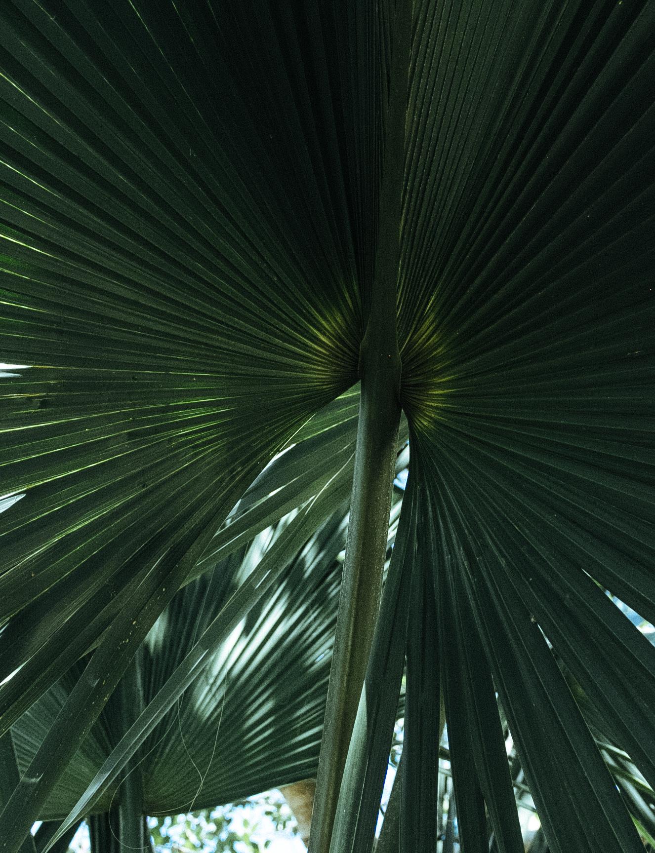 Tulum, Cenote, Eufemia Tg - México Tropical® travel agency-30.jpg