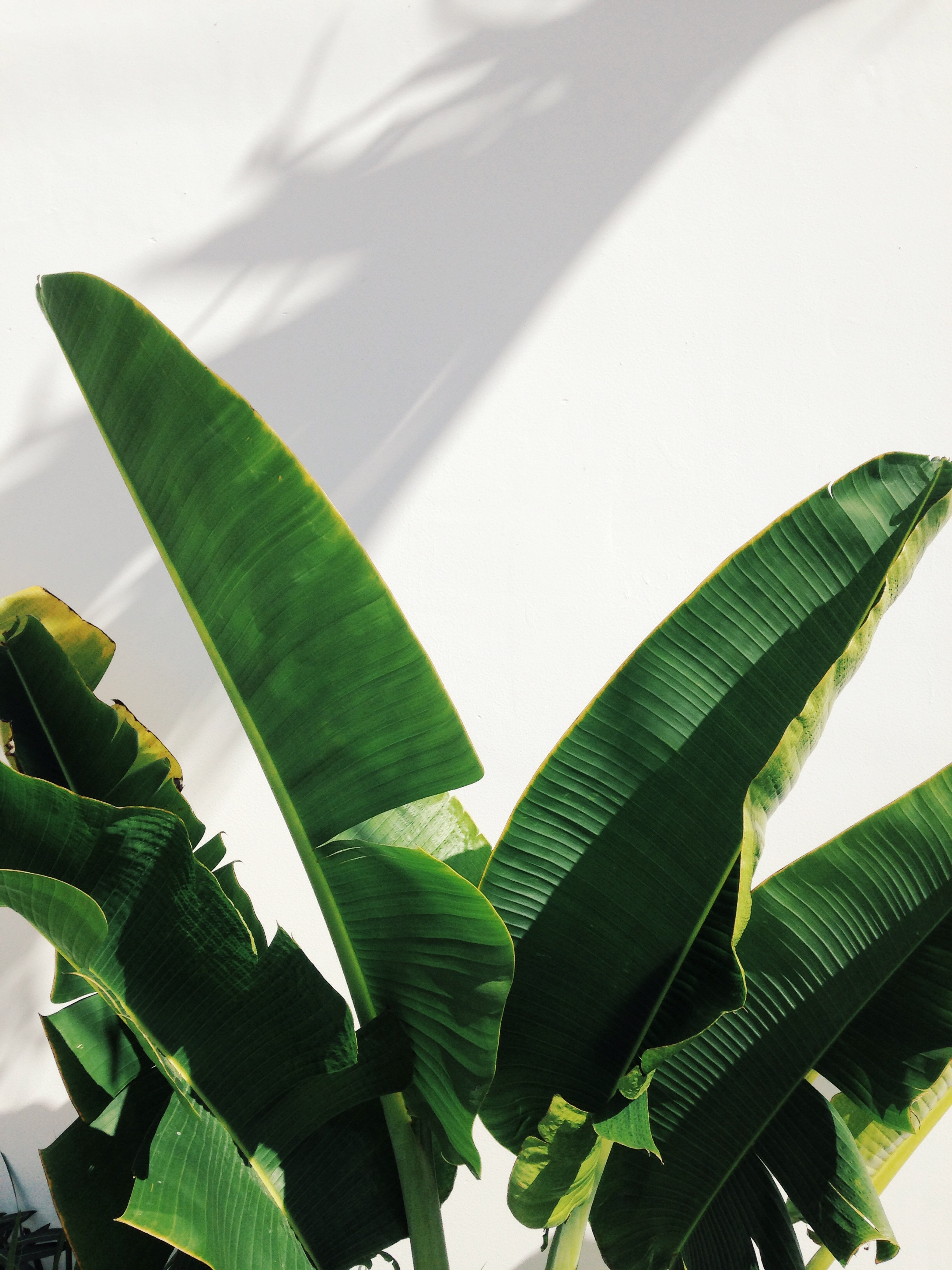 Tropical Leaves - Mexico Tropical® travel agency.JPG