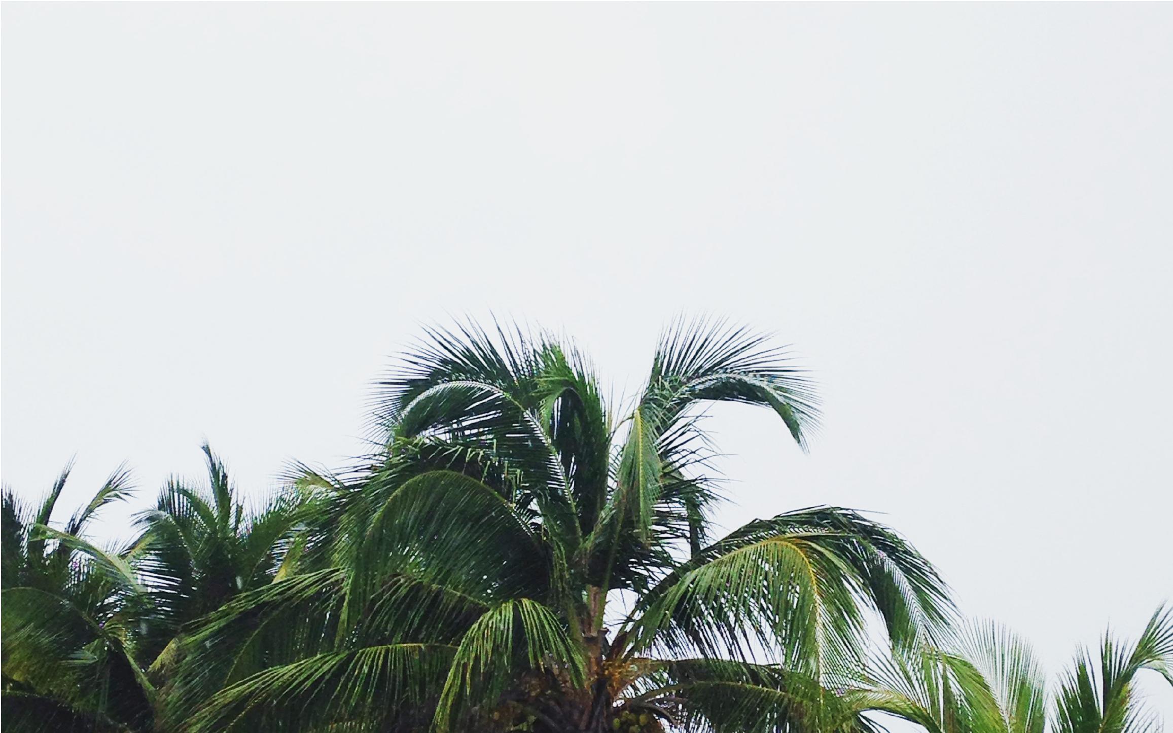La frontera tropical - Playa del Carmen, tu próximo destino en México.A 45 mins de Cancún, código CUN.