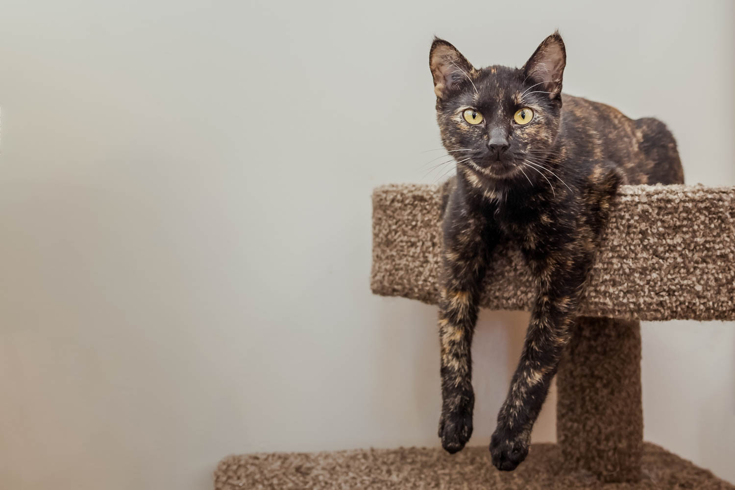 Lisa_Witherley_Happy_Cat_Sanctuary_rescue_cats (2 of 24).jpg