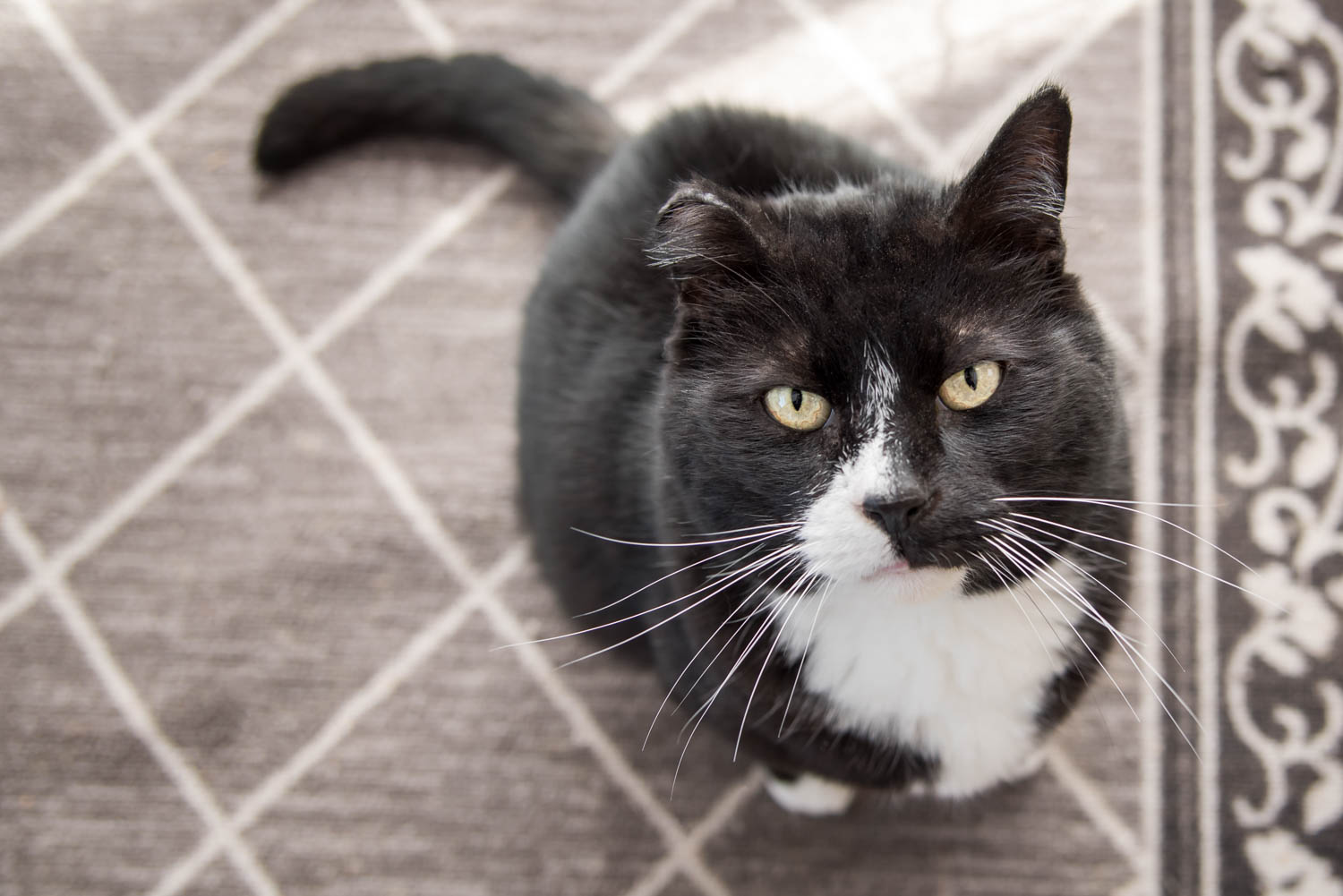 Lisa_Witherley_Happy_Cat_Sanctuary_rescue_cats (3 of 24).jpg