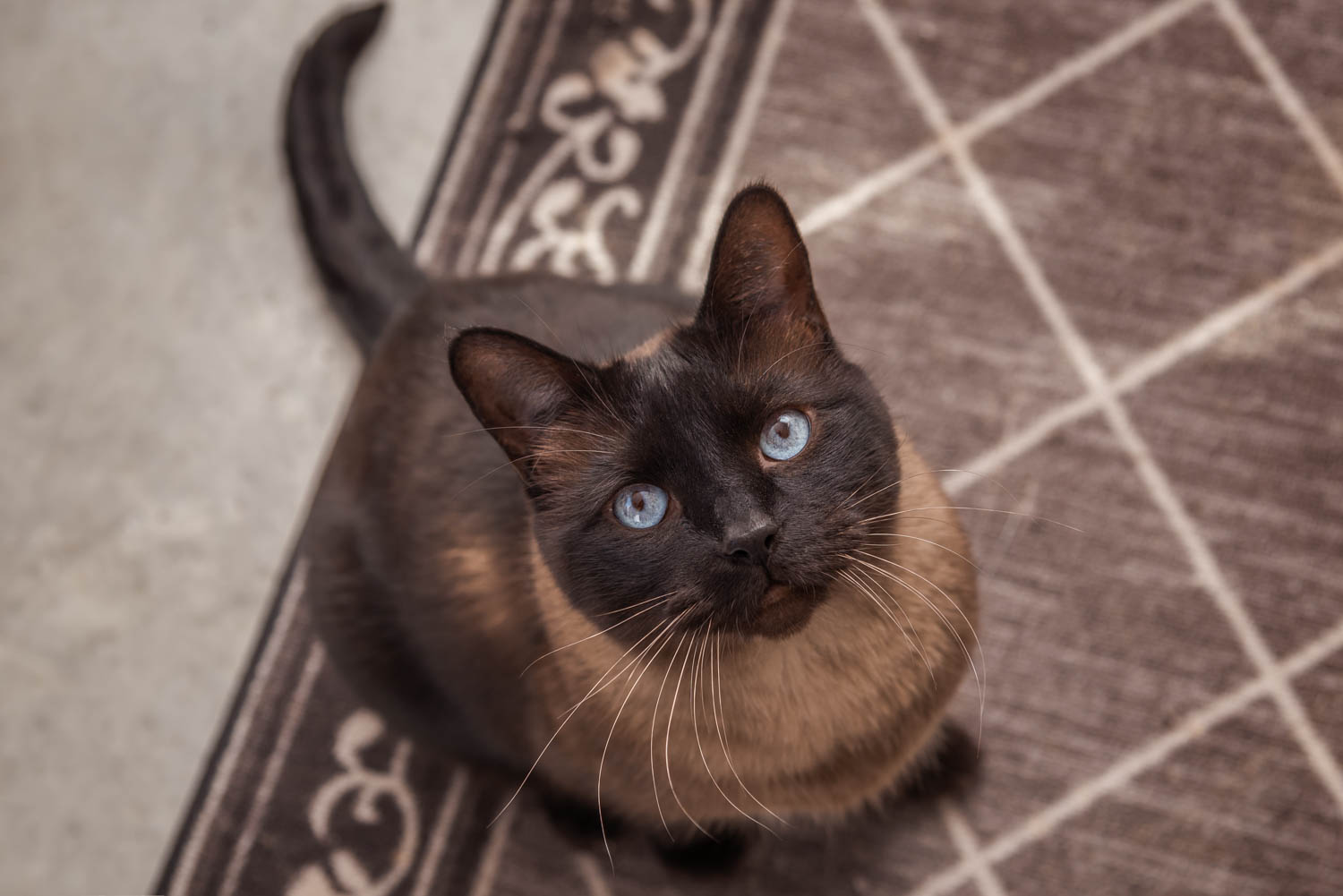 Lisa_Witherley_Happy_Cat_Sanctuary_rescue_cats (4 of 24).jpg