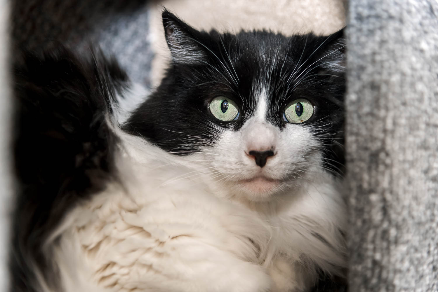 Lisa_Witherley_Happy_Cat_Sanctuary_rescue_cats (5 of 24).jpg